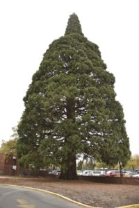 BSPR: St. Luke's to find new home for iconic tree
