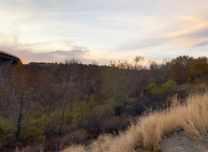 Plan would enhance key habitat area along Boise River