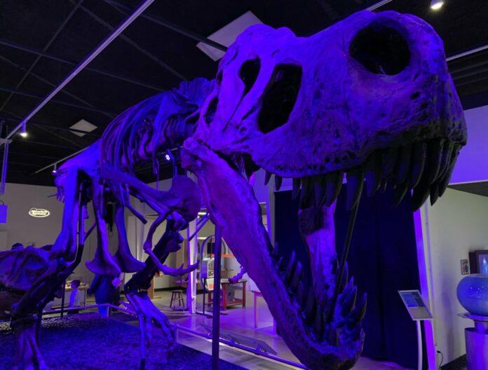 Tinker the T-Rex