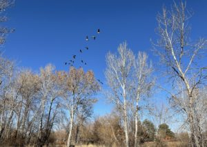 Developer of former Plantation club hopes to bring golf to Boise River 'island'