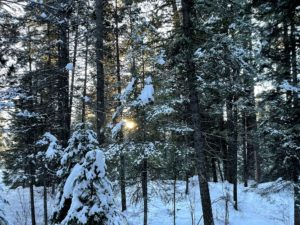 Trident submits formal proposal for large (but reduced) McCall-area land swap