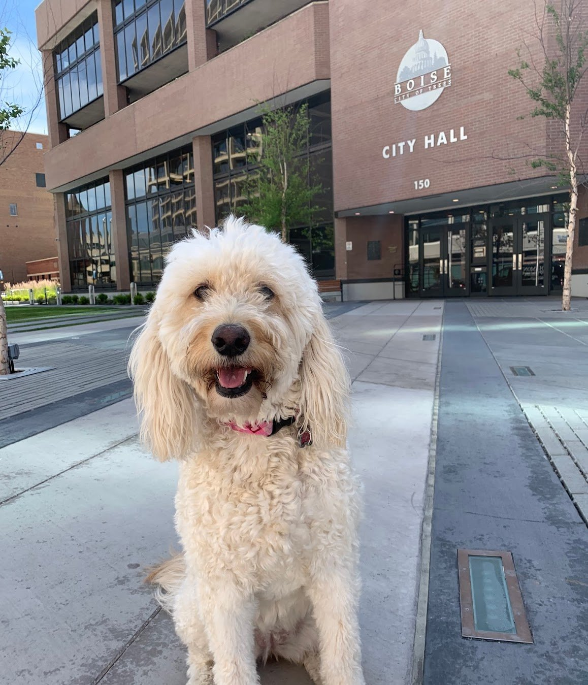 Council could change Boise's animal code: hot cars, pet stores, exotic animals